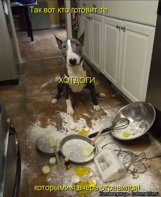 Котоматрица: Так вот кто готовит те ХОТДОГИ которыми я вчера отравился!
