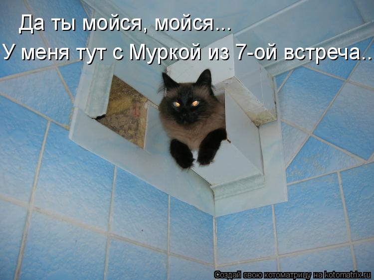 Котоматрица: Да ты мойся, мойся... У меня тут с Муркой из 7-ой встреча...