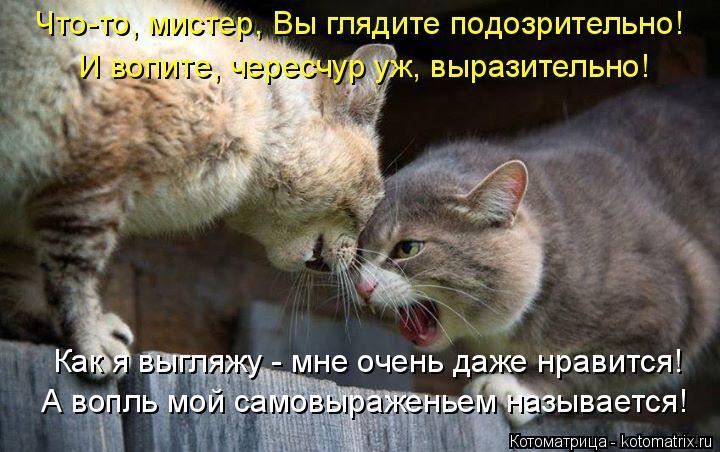 Котоматрица: Что-то, мистер, Вы глядите подозрительно! И вопите, чересчур уж, выразительно! Как я выгляжу - мне очень даже нравится! А вопль мой самовыраже