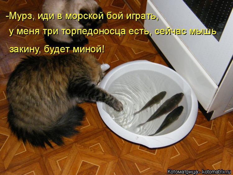 Котоматрица: -Мурз, иди в морской бой играть, у меня три торпедоносца есть, сейчас мышь  закину, будет миной!