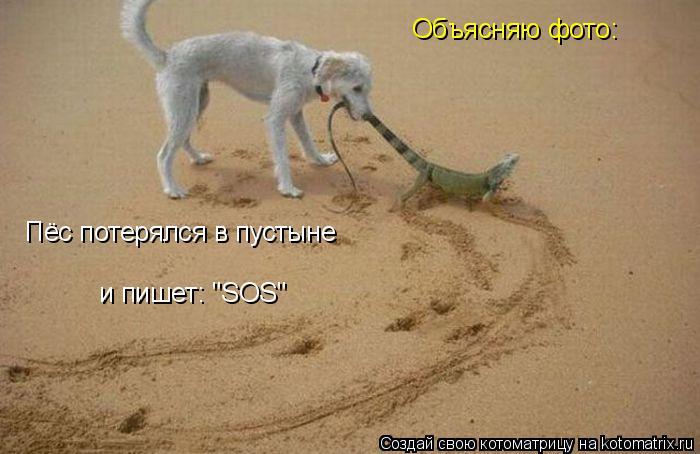 """Котоматрица: Объясняю фото: Пёс потерялся в пустыне и пишет: """"SOS"""""""