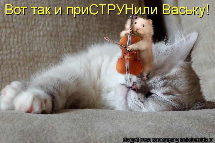 Котоматрица: Вот так и приСТРУНили Ваську!