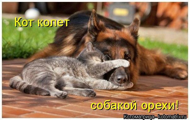 Котоматрица: Кот колет собакой орехи!