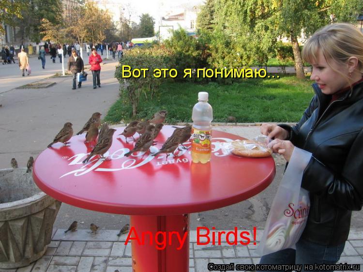 Котоматрица: Вот это я понимаю... Angry Birds!