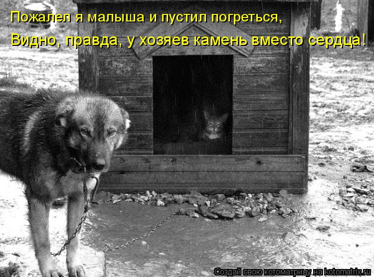 Котоматрица: Пожалел я малыша и пустил погреться, Видно, правда, у хозяев камень вместо сердца!