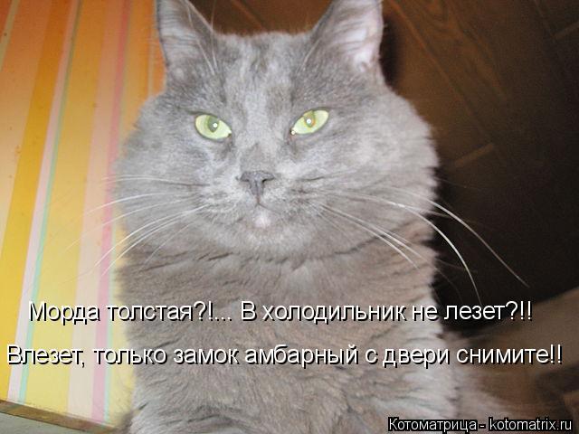 Котоматрица: Морда толстая?!... В холодильник не лезет?!! Влезет, только замок амбарный с двери снимите!!