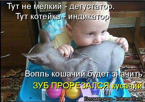 Котоматрица: Тут не мелкий - дегустатор. Тут котейка - индикатор. Вопль кошачий будет значить: ЗУБ ПРОРЕЗАЛСЯ кусачий!!!