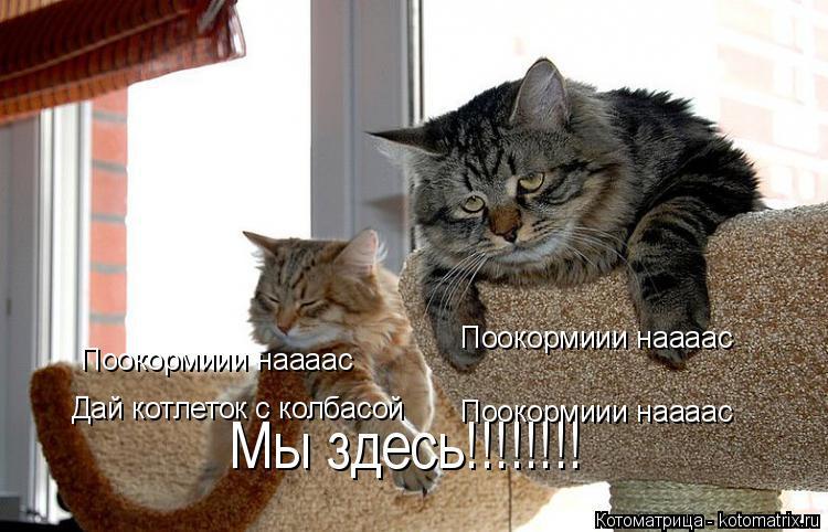 Котоматрица: Поокормиии наааас Поокормиии наааас Дай котлеток с колбасой Поокормиии наааас Мы здесь!!!!!!!!