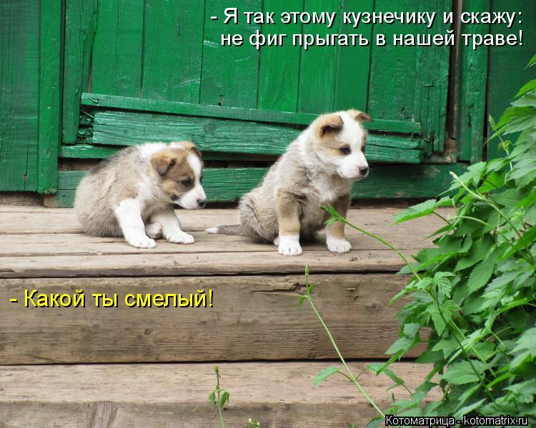 Котоматрица: - Я так этому кузнечику и скажу: не фиг прыгать в нашей траве! - Какой ты смелый!