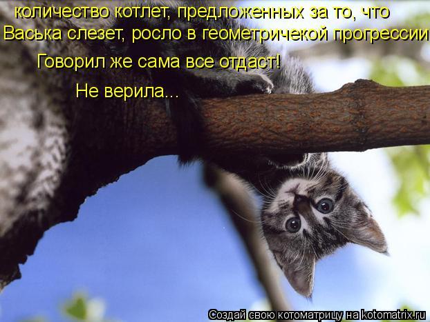Котоматрица: количество котлет, предложенных за то, что  Васька слезет, росло в геометричекой прогрессии. Говорил же сама все отдаст! Не верила...