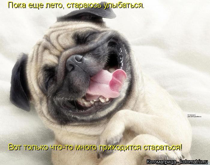 Котоматрица: Пока еще лето, стараюсь улыбаться.  Вот только что-то много приходится стараться!