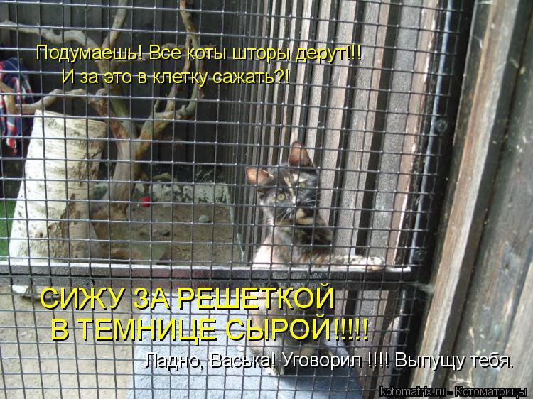 Котоматрица: Подумаешь! Все коты шторы дерут!!! И за это в клетку сажать?! СИЖУ ЗА РЕШЕТКОЙ В ТЕМНИЦЕ СЫРОЙ!!!!! Ладно, Васька! Уговорил !!!! Выпущу тебя.