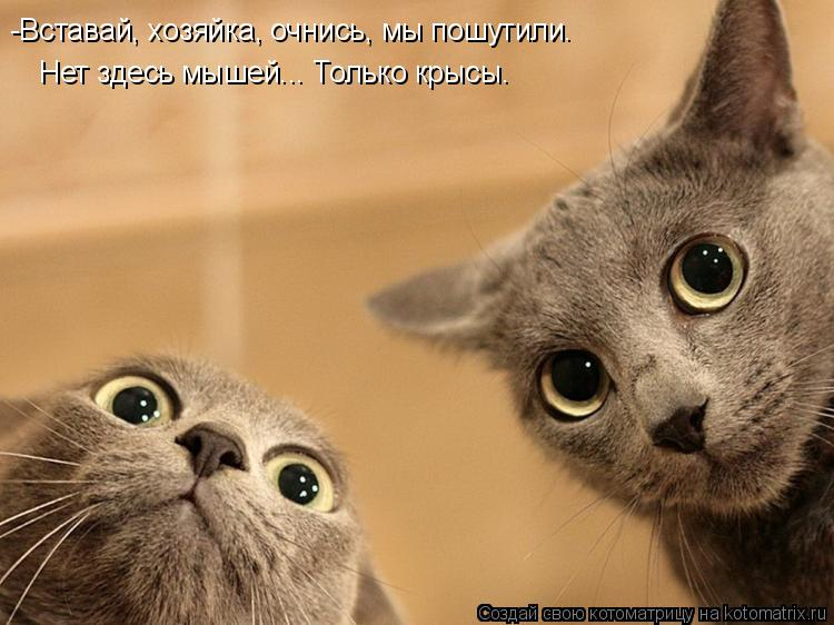 Котоматрица: -Вставай, хозяйка, очнись, мы пошутили. Нет здесь мышей... Только крысы.