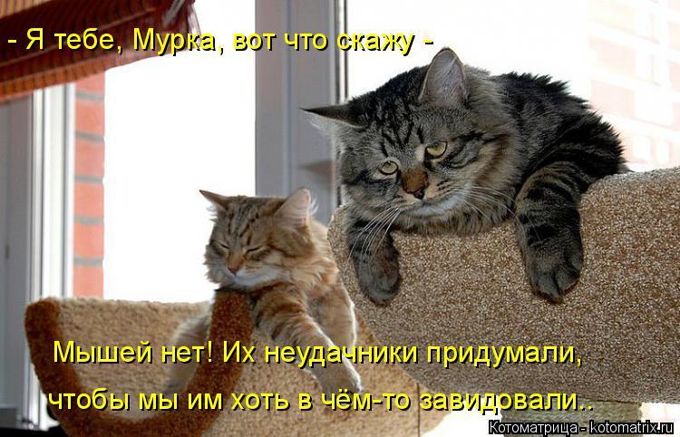 Котоматрица: - Я тебе, Мурка, вот что скажу - Мышей нет! Их неудачники придумали,  чтобы мы им хоть в чём-то завидовали..