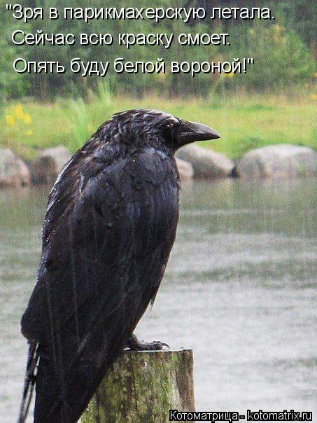 """Котоматрица: """"Зря в парикмахерскую летала. Сейчас всю краску смоет.  Опять буду белой вороной!"""""""
