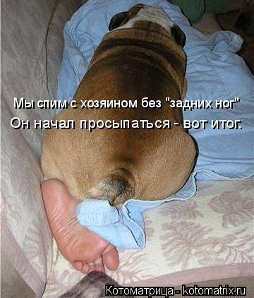 """Котоматрица: Мы спим с хозяином без """"задних ног"""" Он начал просыпаться - вот итог."""
