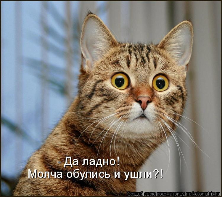 Котоматрица: - Да ладно! Молча обулись и ушли?!