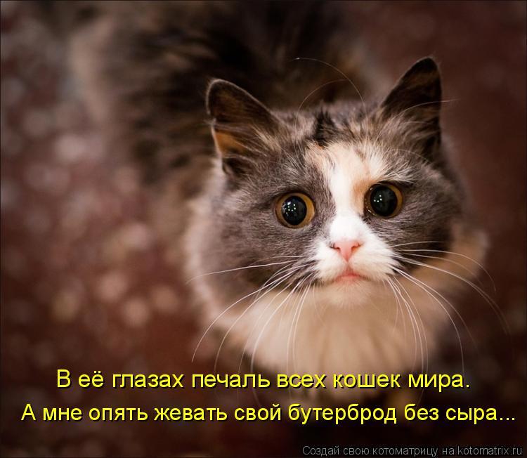 Котоматрица: В её глазах печаль всех кошек мира. А мне опять жевать свой бутерброд без сыра...