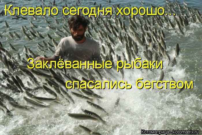Котоматрица: Клевало сегодня хорошо... Заклёванные рыбаки спасались бегством