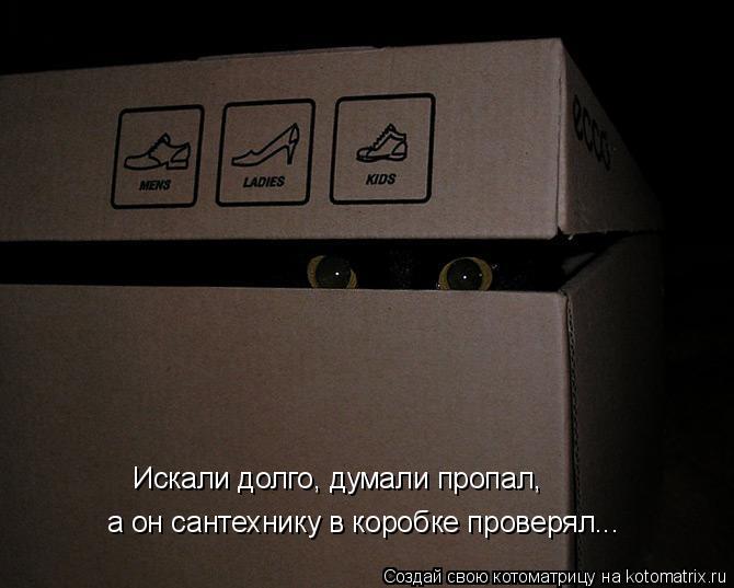 Котоматрица: а он сантехнику в коробке проверял... Искали долго, думали пропал,