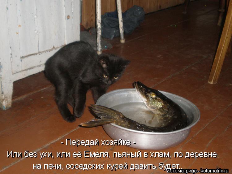 Котоматрица: - Передай хозяйке - на печи, соседских курей давить будет...  Или без ухи, или её Емеля, пьяный в хлам, по деревне