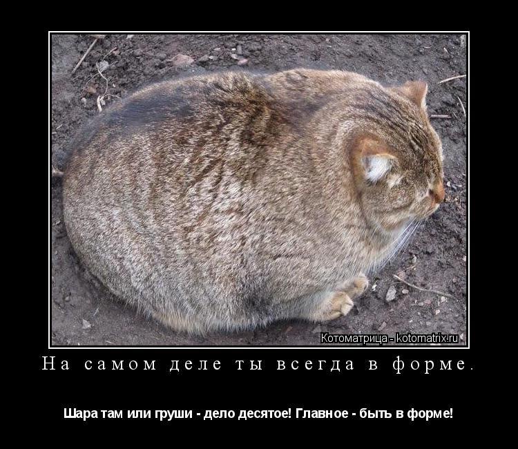 Котоматрица: На самом деле ты всегда в форме. Шара там или груши - дело десятое! Главное - быть в форме!