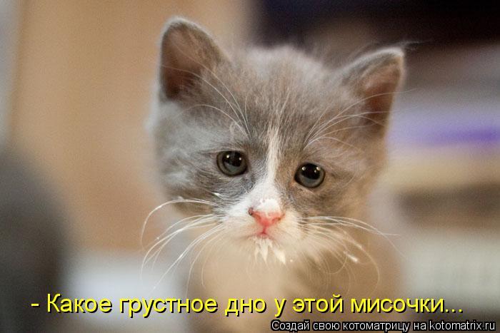 Котоматрица: - Какое грустное дно у этой мисочки...