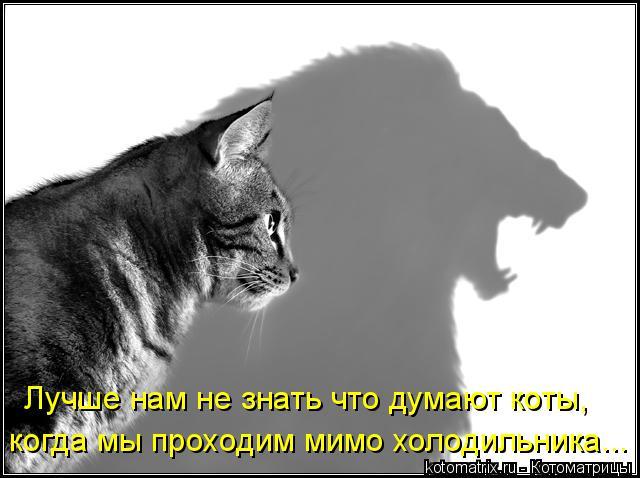 Котоматрица: когда мы проходим мимо холодильника... Лучше нам не знать что думают коты,