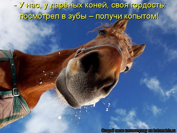Котоматрица: - У нас, у дарёных коней, своя гордость: посмотрел в зубы – получи копытом!