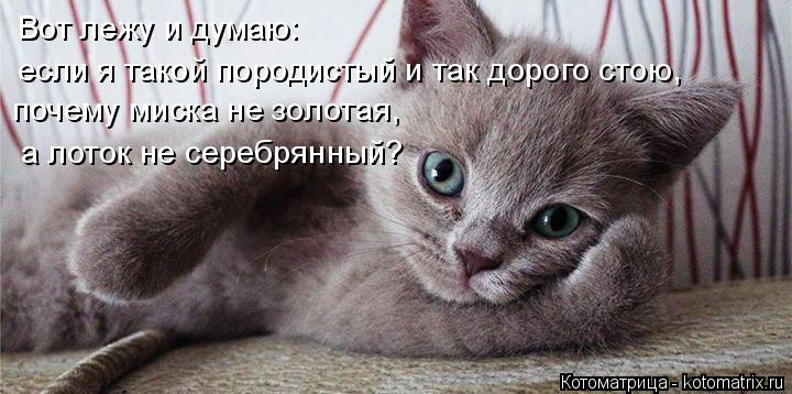 Котоматрица: Вот лежу и думаю: если я такой породистый и так дорого стою, почему миска не золотая, а лоток не серебрянный?