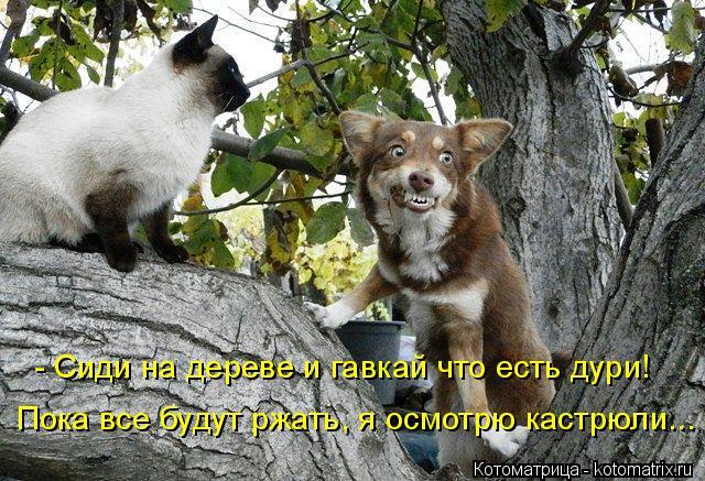 Котоматрица: - Сиди на дереве и гавкай что есть дури! Пока все будут ржать, я осмотрю кастрюли...