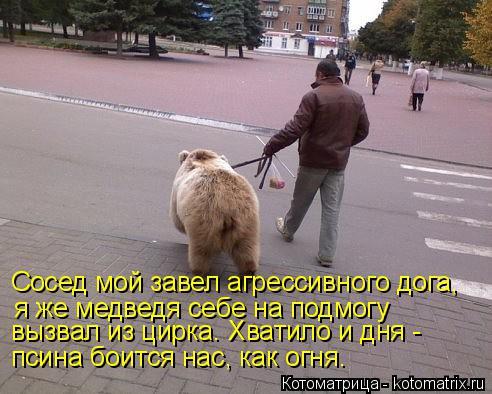 Котоматрица: Сосед мой завел агрессивного дога, я же медведя себе на подмогу псина боится нас, как огня. вызвал из цирка. Хватило и дня -