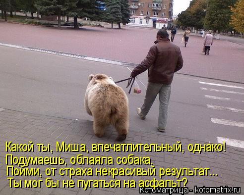 Котоматрица: Какой ты, Миша, впечатлительный, однако! Ты мог бы не пугаться на асфальт? Пойми, от страха некрасивый результат... Подумаешь, облаяла собака.