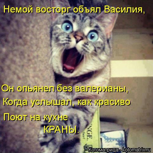 Котоматрица: Немой восторг объял Василия, Он опьянел без валерианы, Когда услышал, как красиво  Поют на кухне  КРАНЫ.