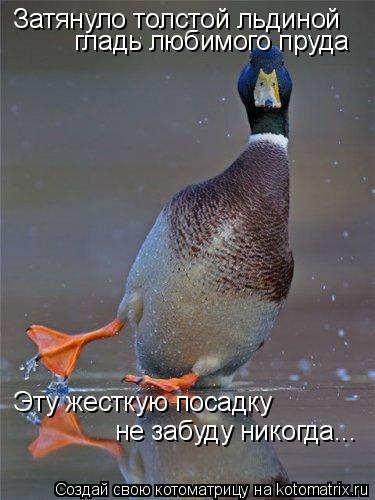 Котоматрица: Затянуло толстой льдиной гладь любимого пруда Эту жесткую посадку не забуду никогда...