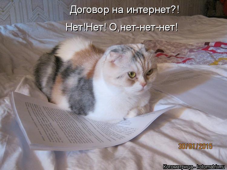 Котоматрица: Договор на интернет?! Нет!Нет! О,нет-нет-нет!