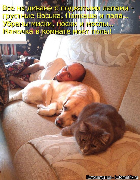 Котоматрица: Все на диване с поджатыми лапами - грустные Васька, Полкаша и папа… Убраны миски, носки и мослы… Мамочка в комнате моет полы!