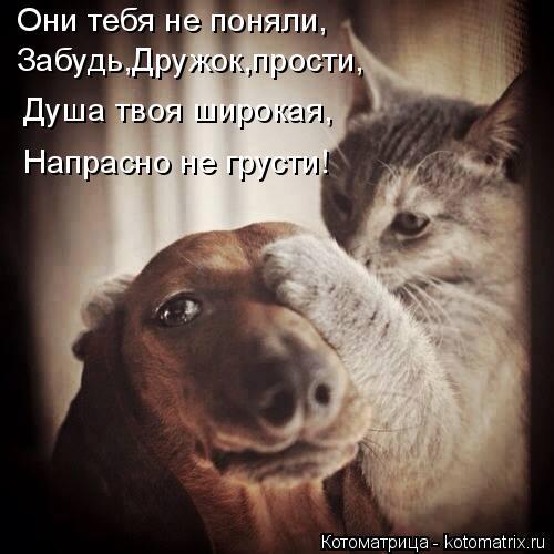 Котоматрица: Они тебя не поняли, Забудь,Дружок,прости, Душа твоя широкая, Напрасно не грусти!