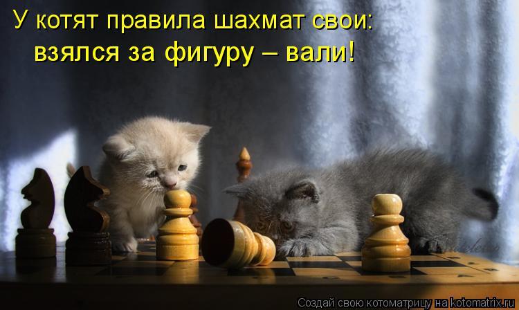 Котоматрица: У котят правила шахмат свои:  взялся за фигуру – вали!