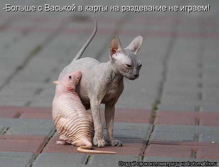 Котоматрица: -Больше с Васькой в карты на раздевание не играем!