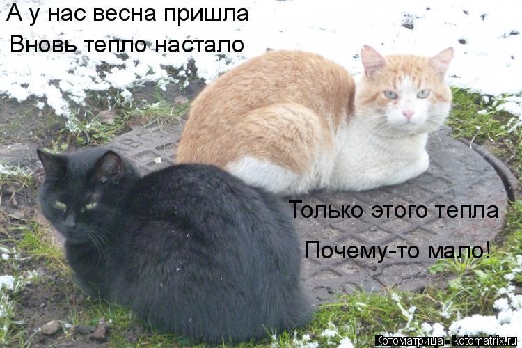 Котоматрица: А у нас весна пришла Вновь тепло настало Только этого тепла Почему-то мало!
