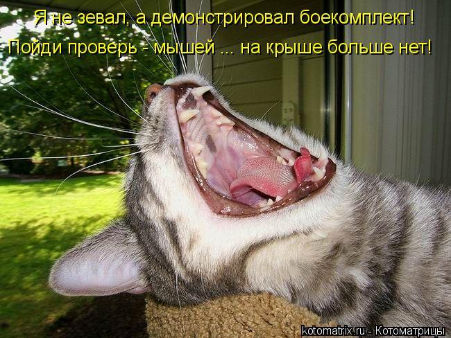 Котоматрица: Я не зевал, а демонстрировал боекомплект! Пойди проверь - мышей ... на крыше больше нет!