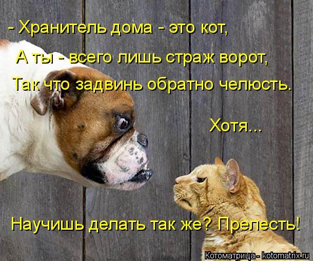 Котоматрица: - Хранитель дома - это кот,  А ты - всего лишь страж ворот, Так что задвинь обратно челюсть. Хотя... Научишь делать так же? Прелесть!