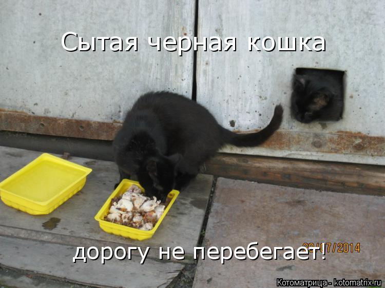 Котоматрица: Сытая черная кошка дорогу не перебегает!