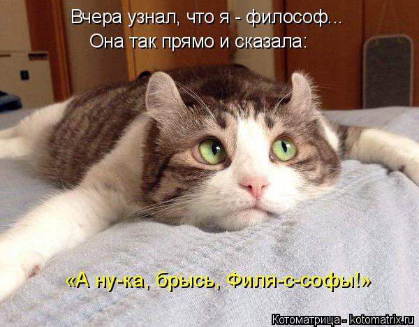 Котоматрица: Вчера узнал, что я - философ... Она так прямо и сказала: «А ну-ка, брысь, Филя-с-софы!»