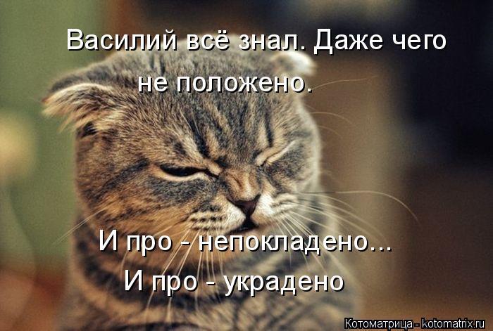 Котоматрица: Василий всё знал. Даже чего не положено.  И про - непокладено... И про - украдено