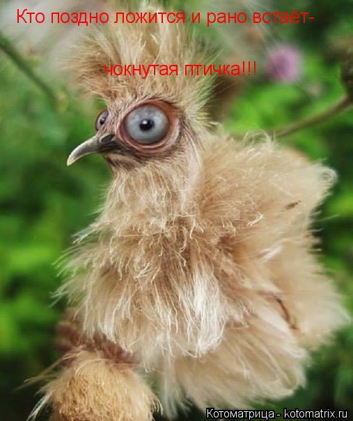 Котоматрица: Кто поздно ложится и рано встаёт-  чокнутая птичка!!!