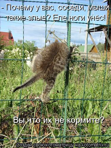Котоматрица: - Почему у вас, соседи, мыши такие злые? Еле ноги унёс!  Вы что их не кормите?