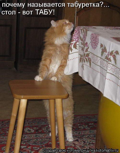 Котоматрица: почему называется табуретка?... стол - вот ТАБУ!