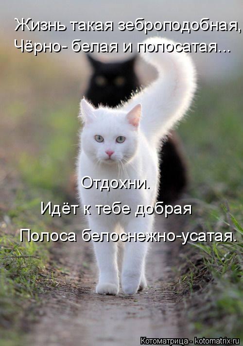 Котоматрица: Жизнь такая зеброподобная, Чёрно- белая и полосатая... Отдохни. Идёт к тебе добрая Полоса белоснежно-усатая.